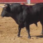 CIMG2541